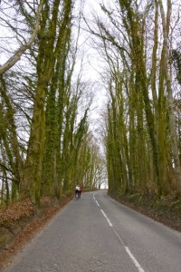 zig zag trees