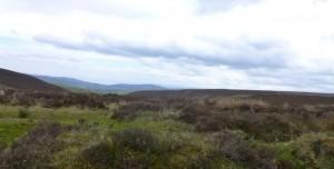 bleak moor view