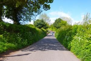 green sunny climb