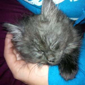sleeping kitten