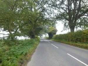 trees roads