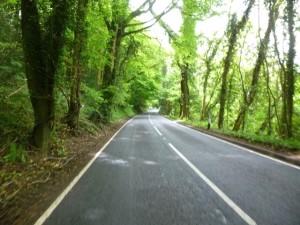 33 tree tunnels