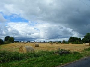 fields-of-rolled-gold