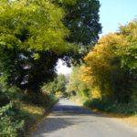 26-autumnal-colours
